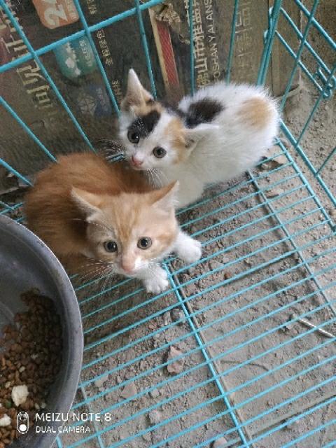 宠物猫免费领养