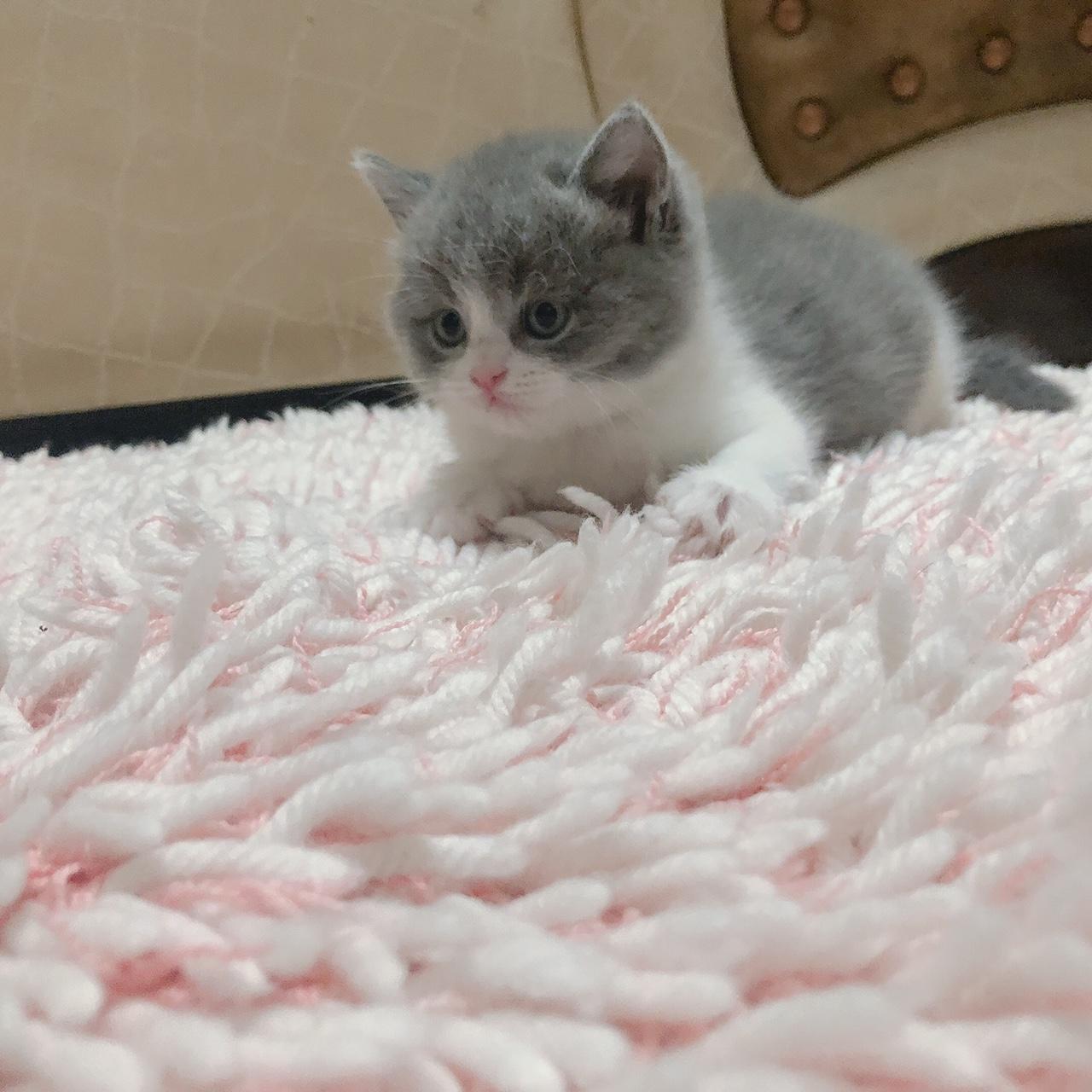 家里的小胖虎滿月啦,有需要的可以上門看貓