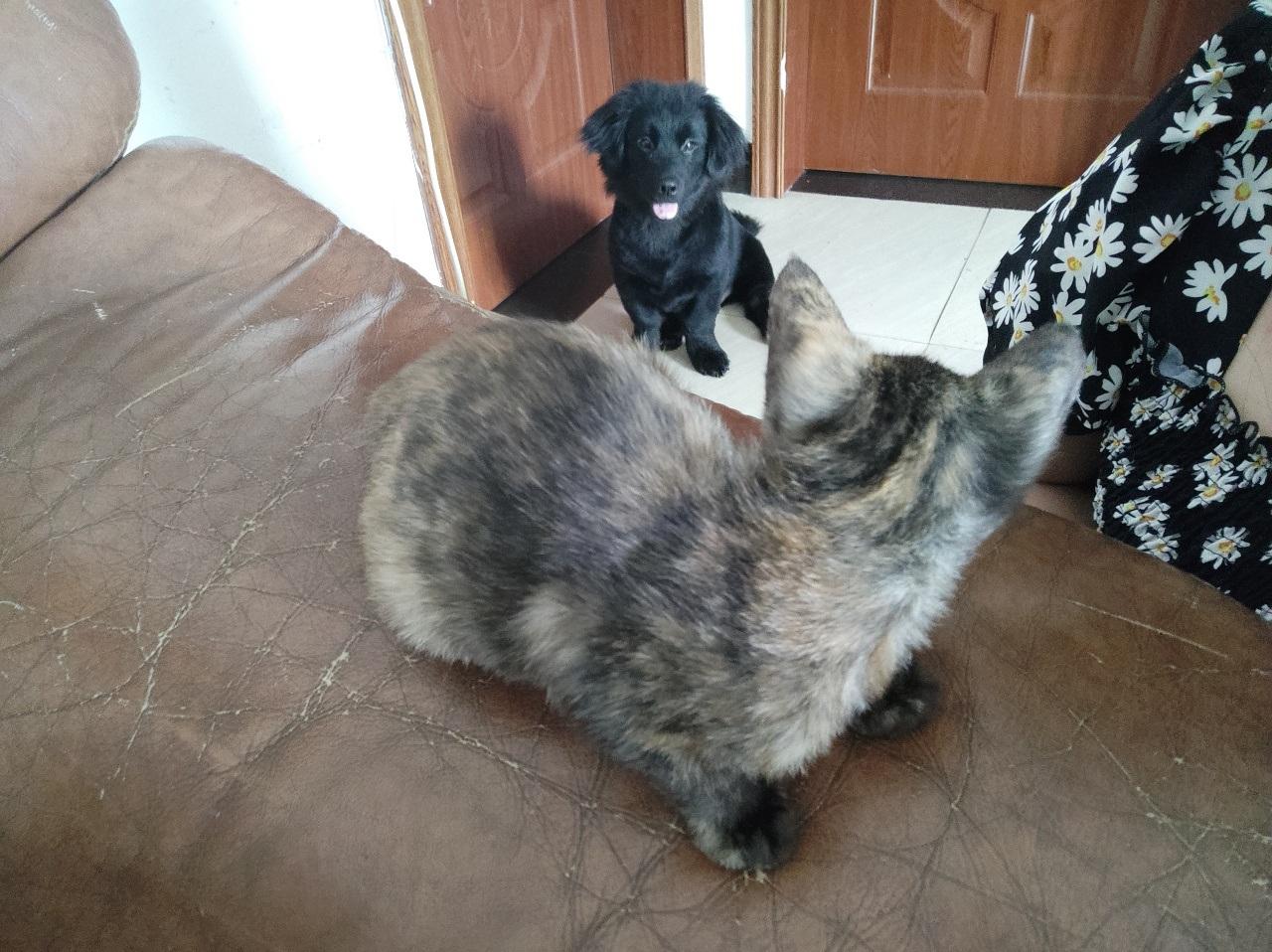 捡到的一只小猫 有没有喜欢要领养的朋友
