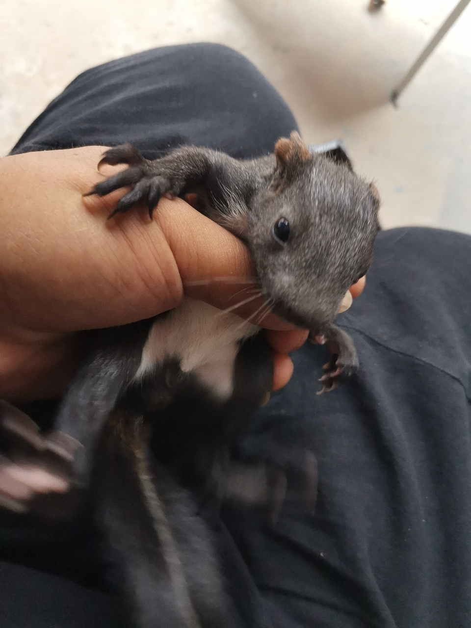 魔王松鼠幼崽出窝了