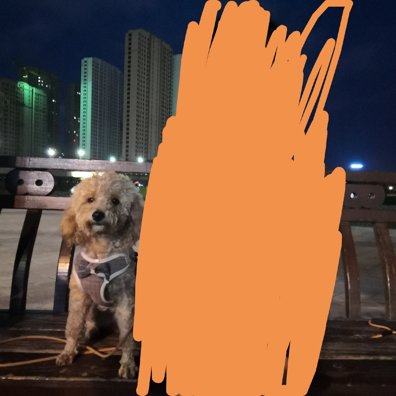 寻狗启示-棕色泰迪