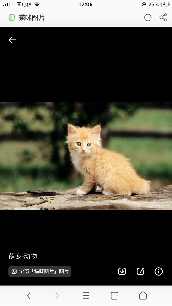 三只可爱的田园小猫求收养