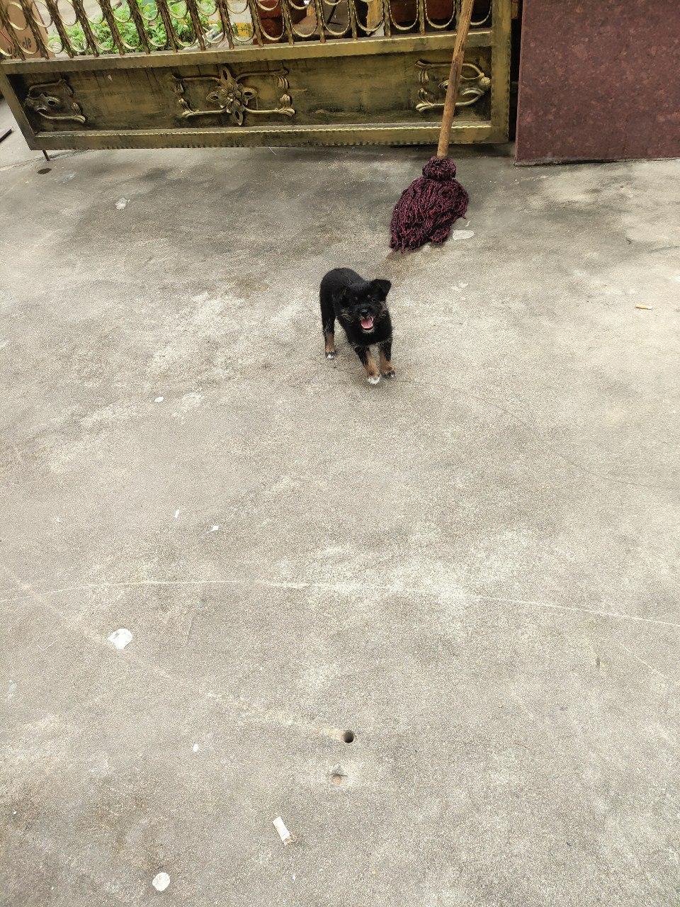 撿了只小土狗,尋個愛狗人士領養