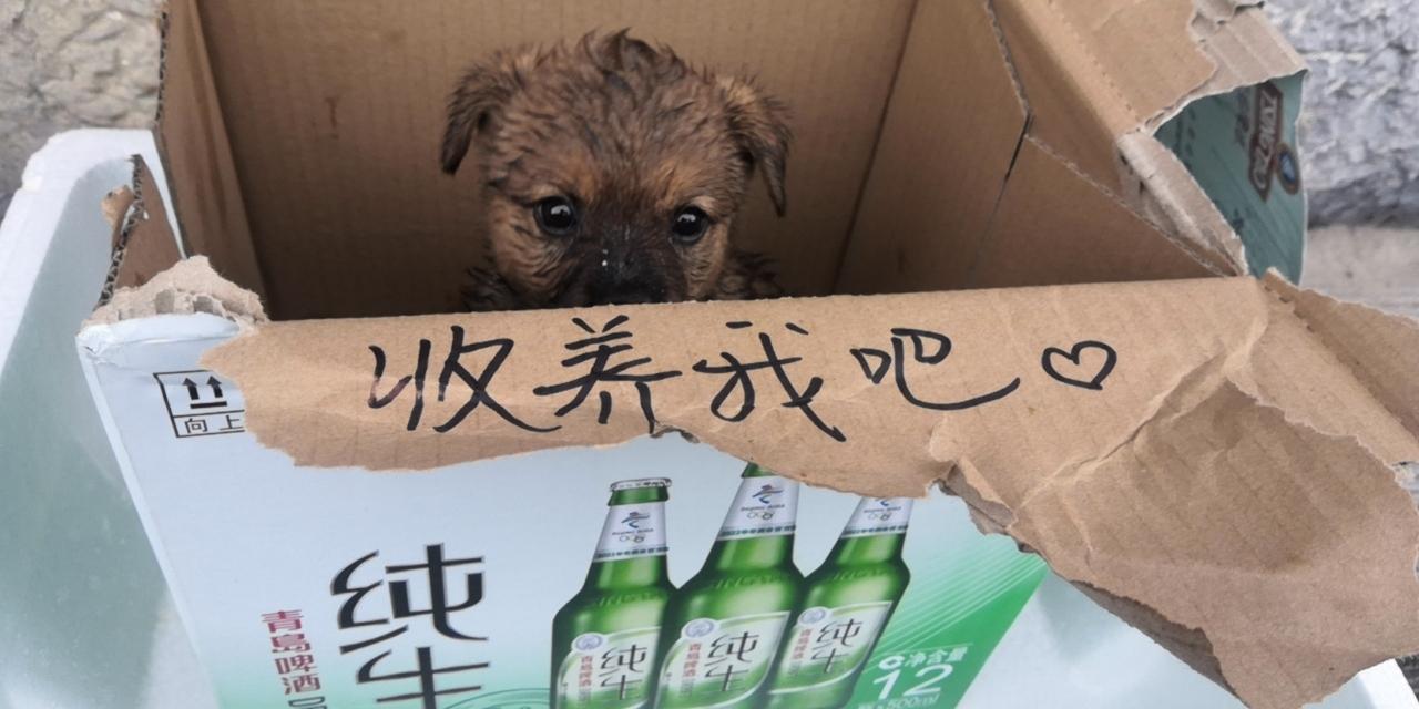 小奶狗求收养