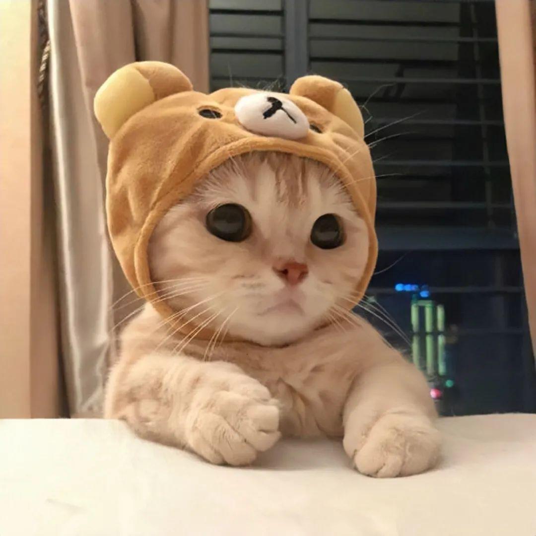 领养或求购一只小狗猫咪