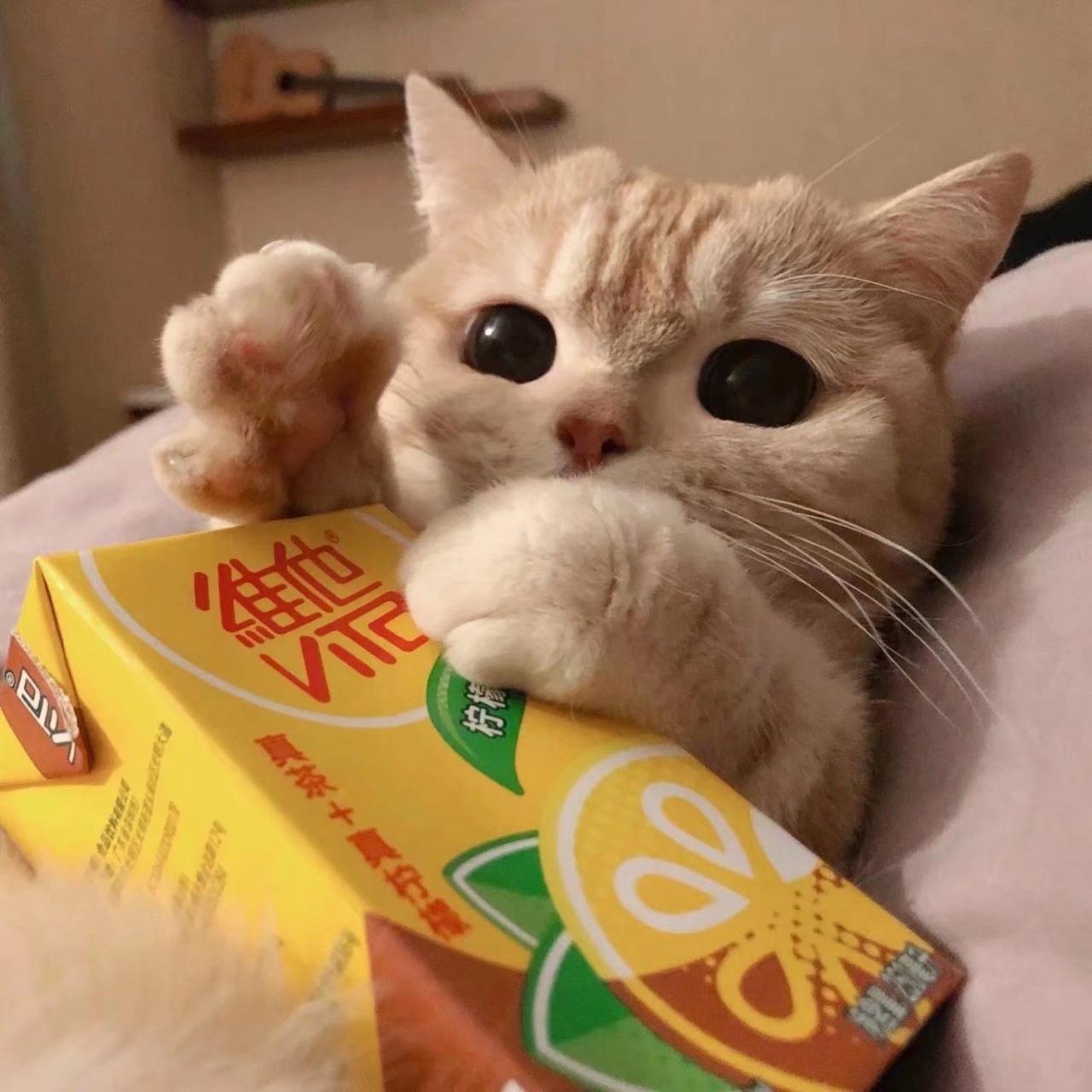 想领养一只小猫有吗?