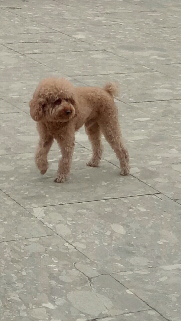 尋找愛犬小辣椒