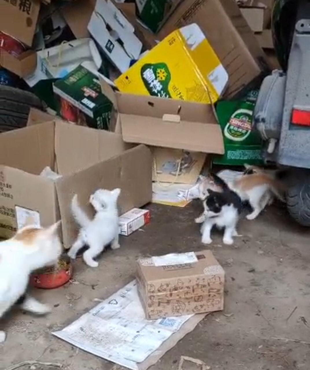免费赠送家养小猫(有白色、橘白、奶牛色)