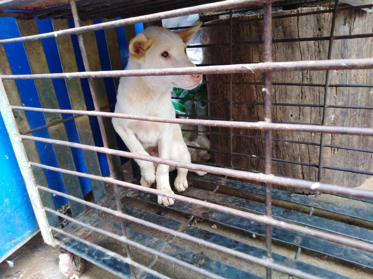 长期大量出售土狗