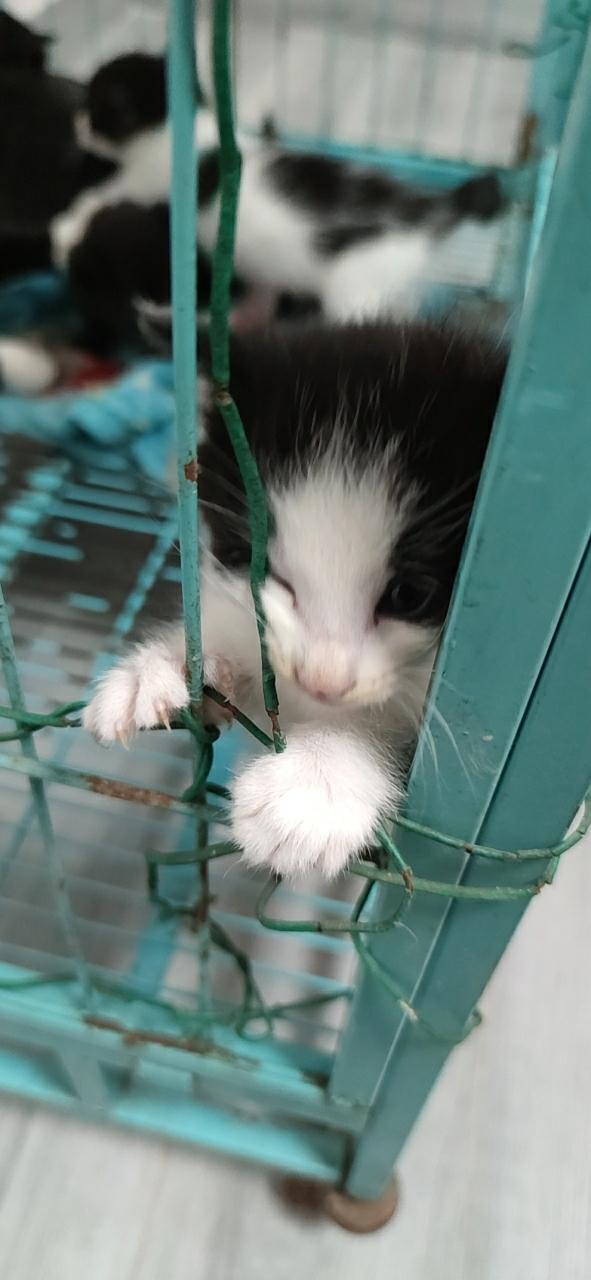 家养田园猫找领养人家
