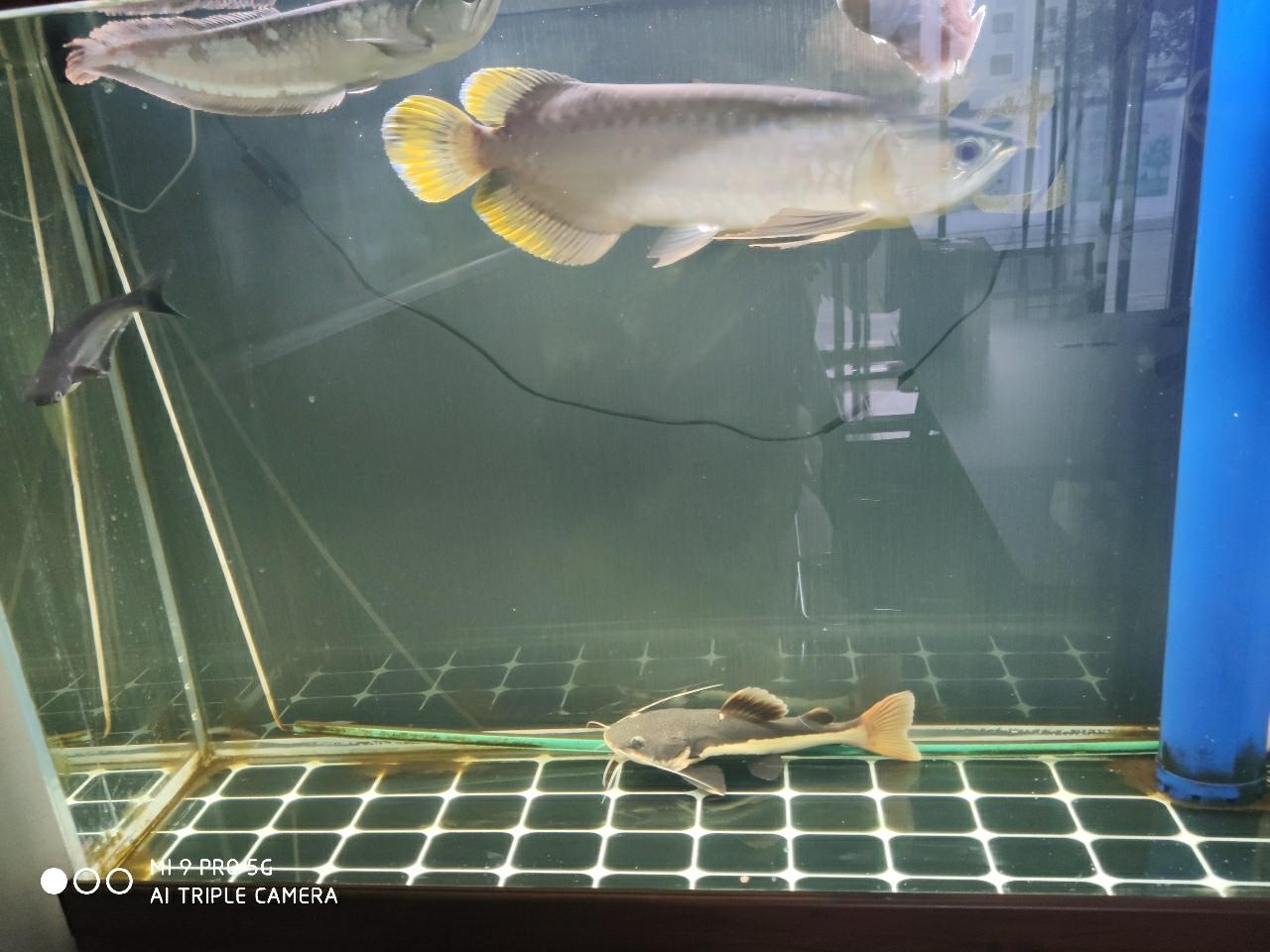 由于事务繁忙,无暇顾及自己养的一缸鱼