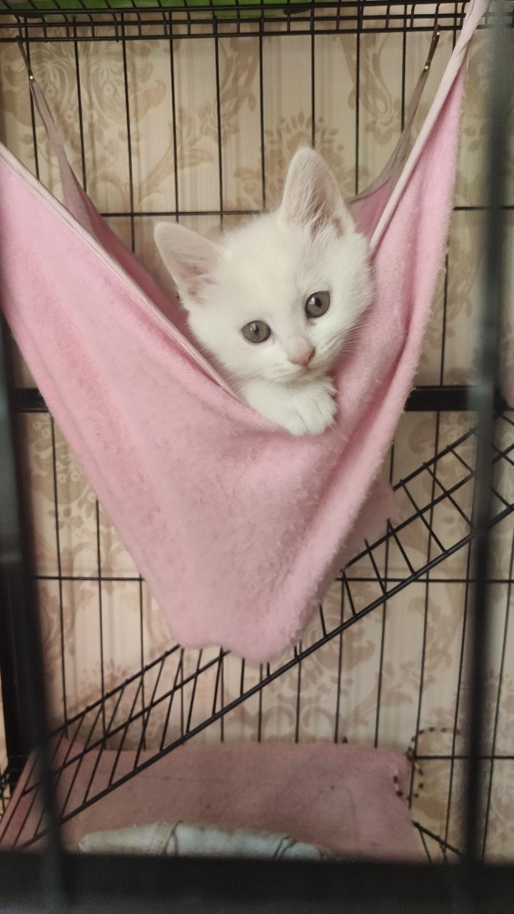 出售小白猫