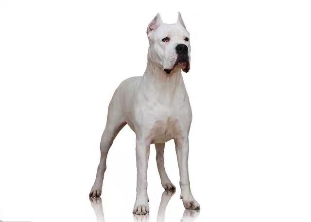 购买一头狗