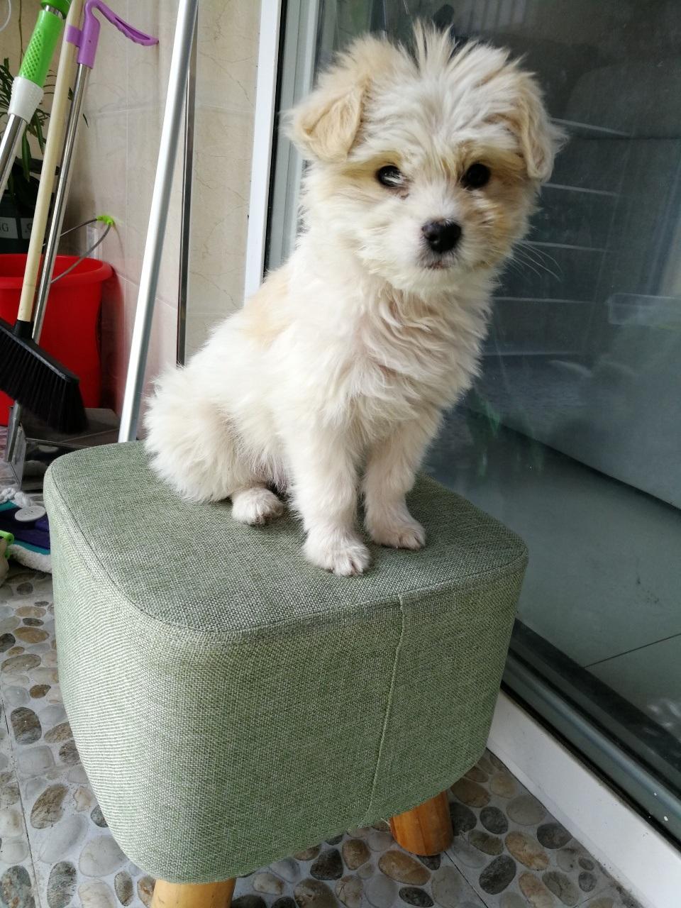 刚捡的小白狗送人