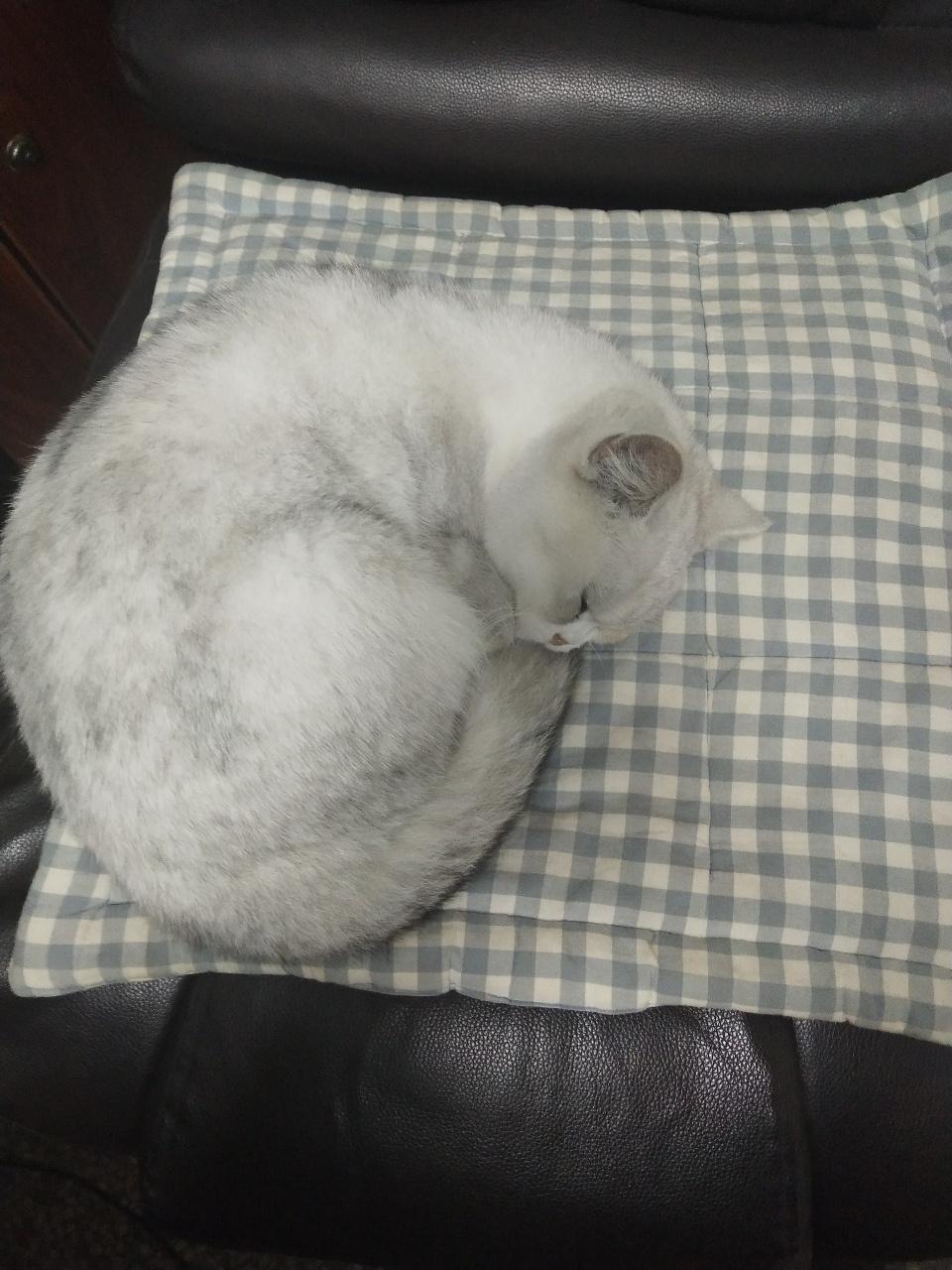 貓,尋失主