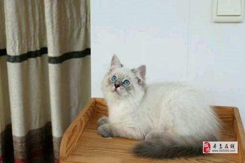 免费赠送自养小猫一只
