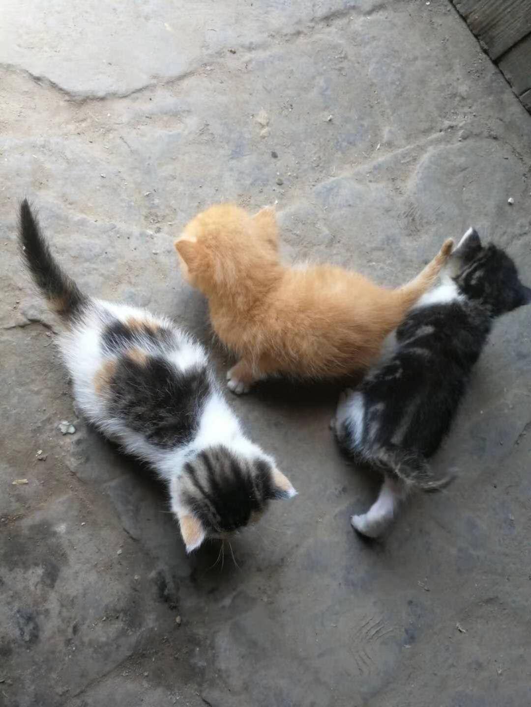 出售奶奶自己养的满月的小猫咪