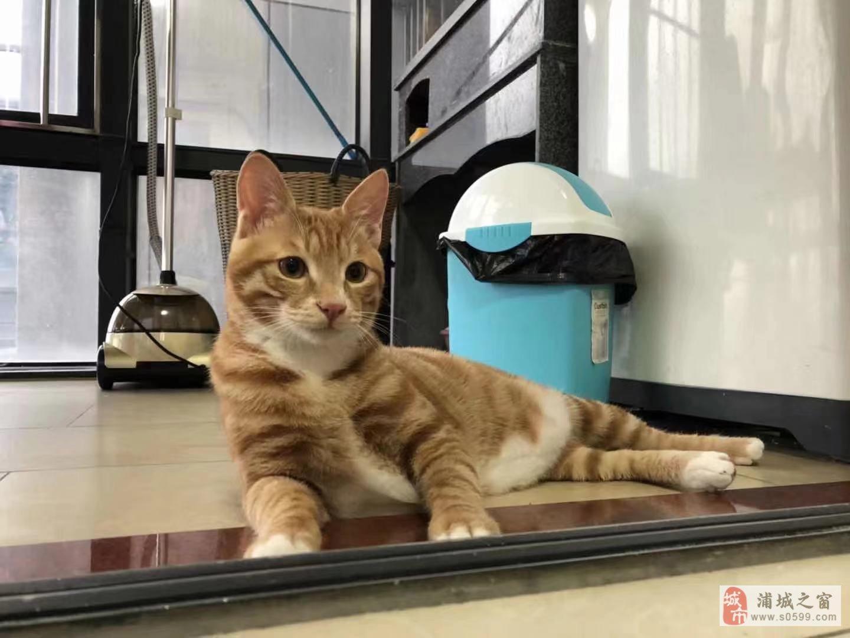 超可爱的小猫咪找领养
