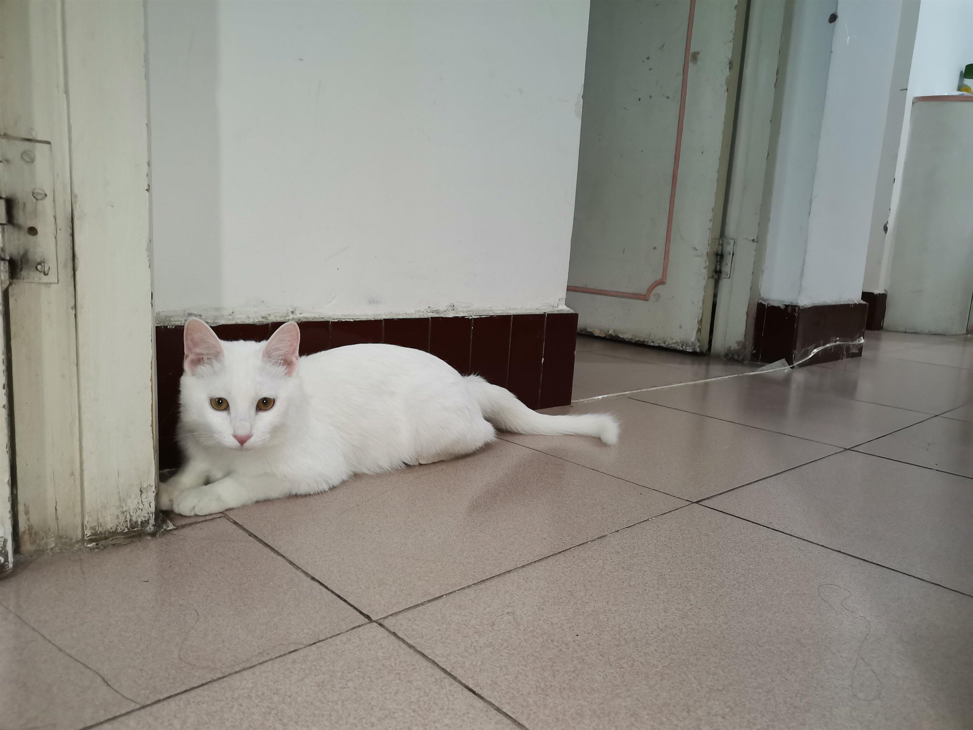 7個月家養貓咪
