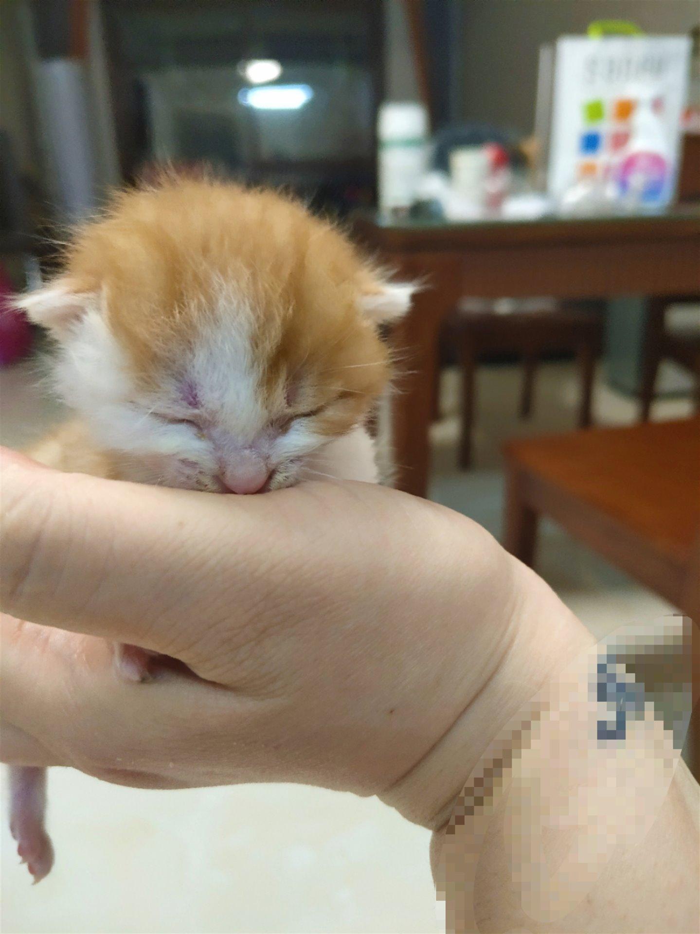 小奶猫领养