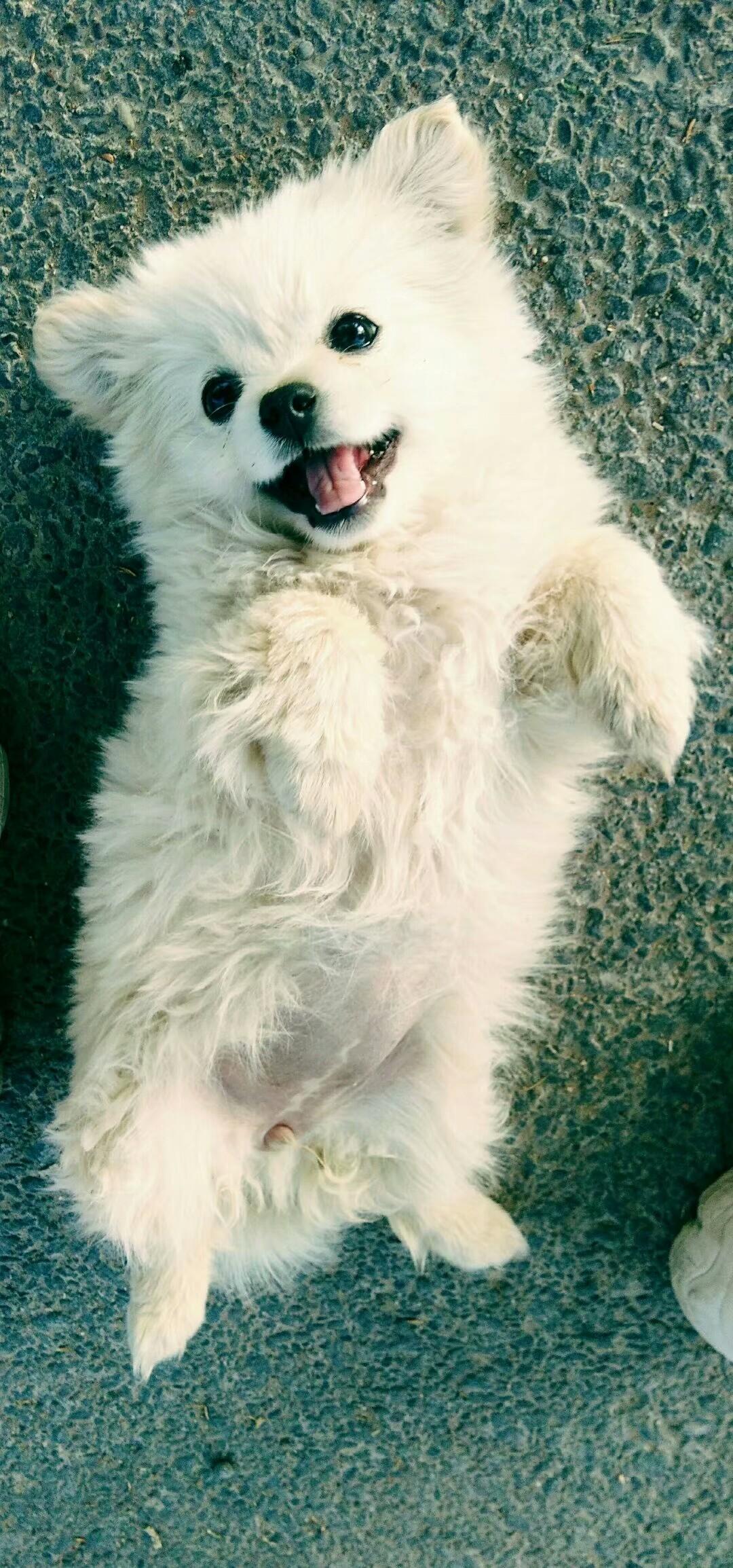 狗狗免费领养