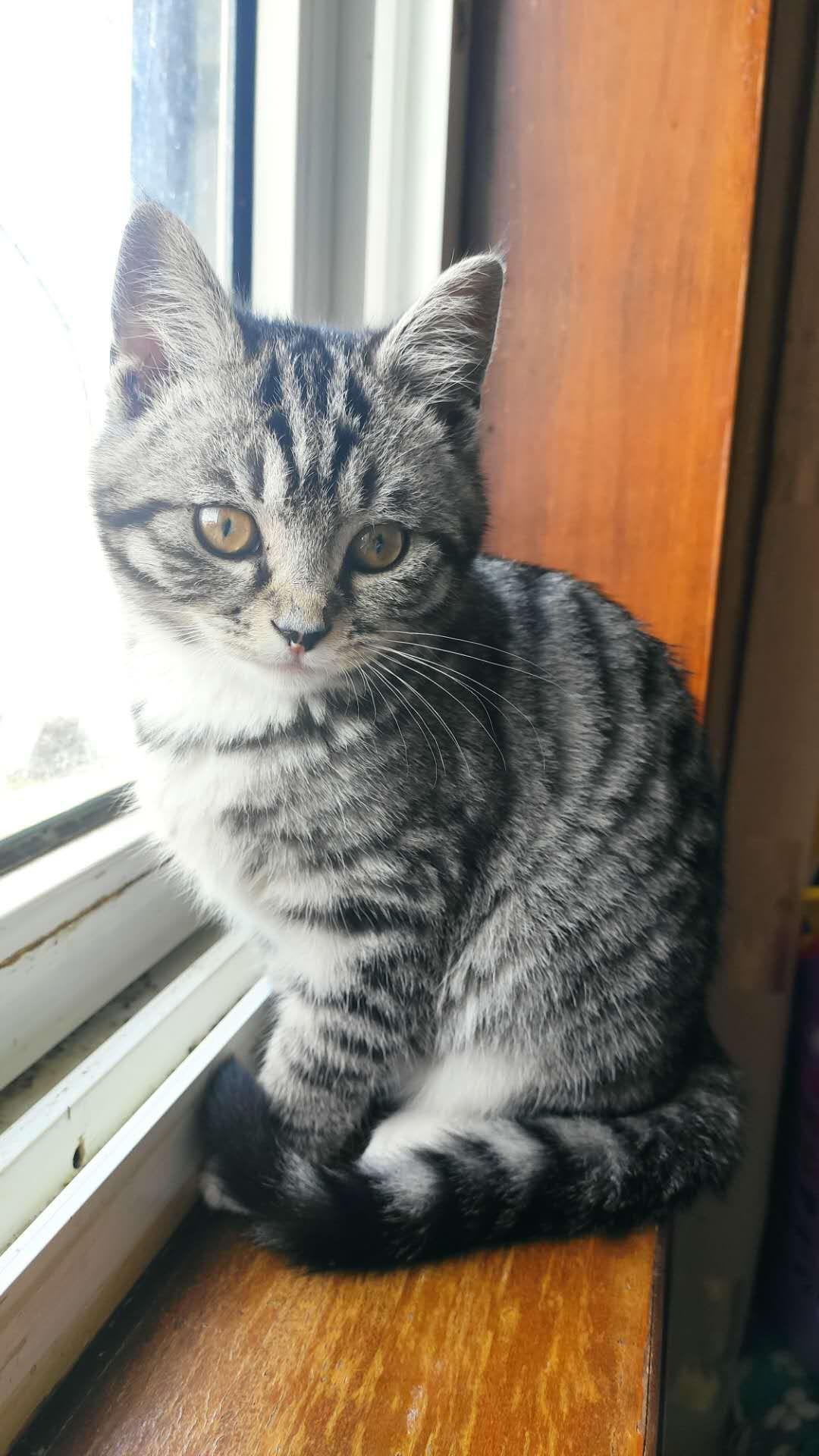 孩子猫咪过敏,希望找个有爱心的新主人