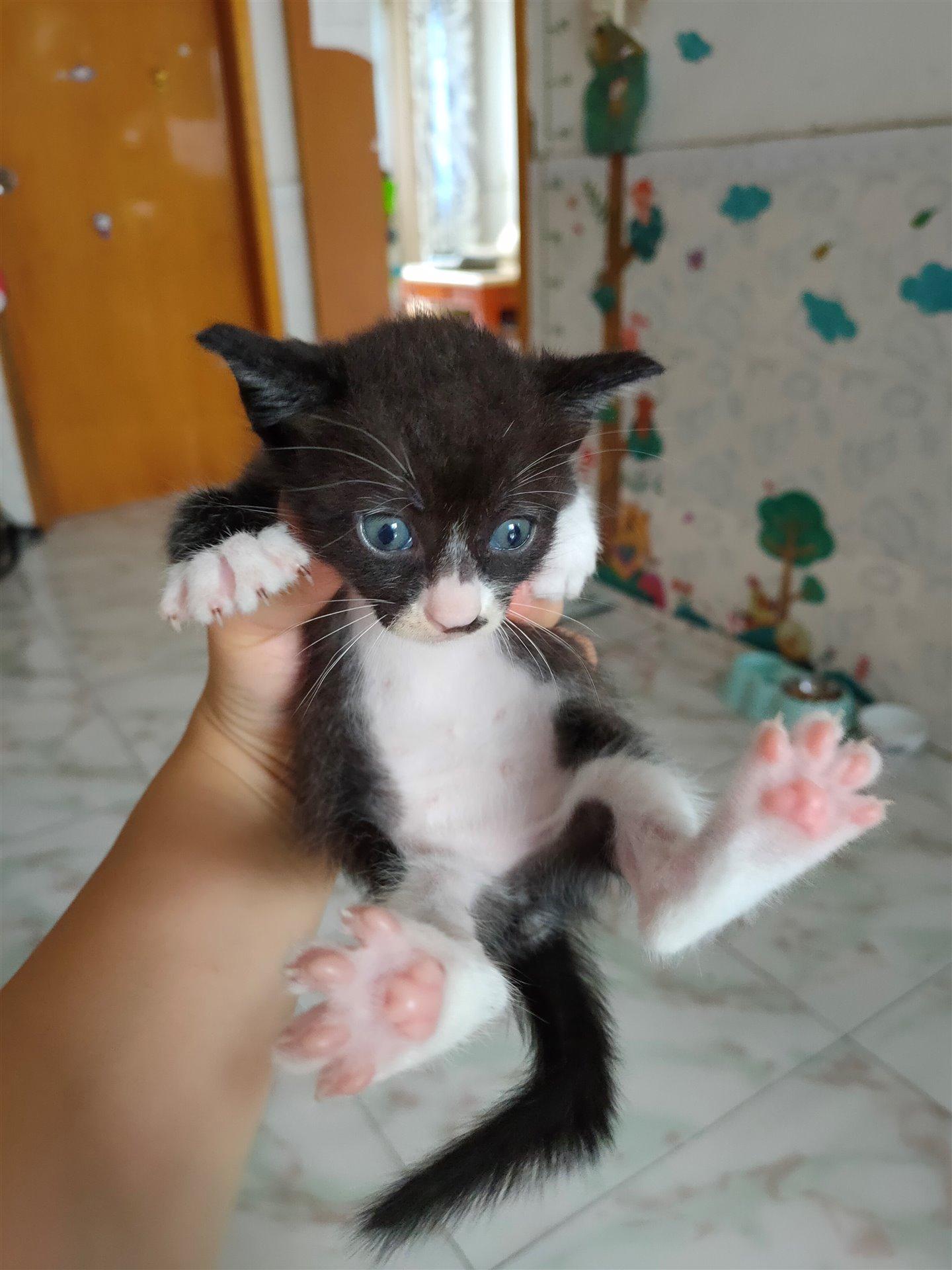 免费送养小猫