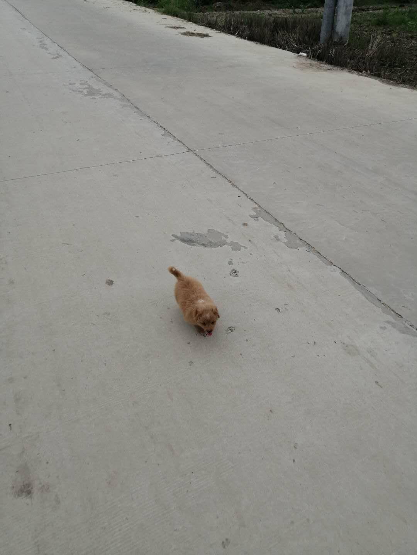 尋找丟失小狗