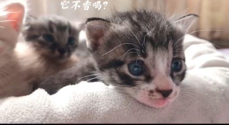 送可愛的小貓咪