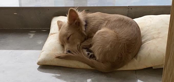 寻找爱犬!十月十号晚狗在黄淮市场附近走失