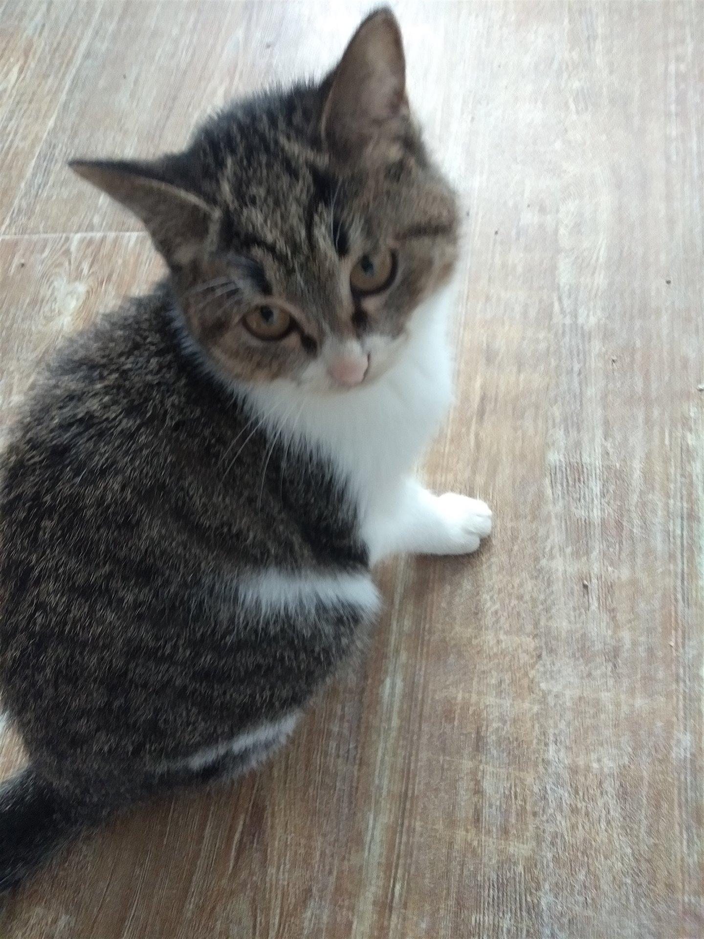 5个月的小猫咪求好心人收养