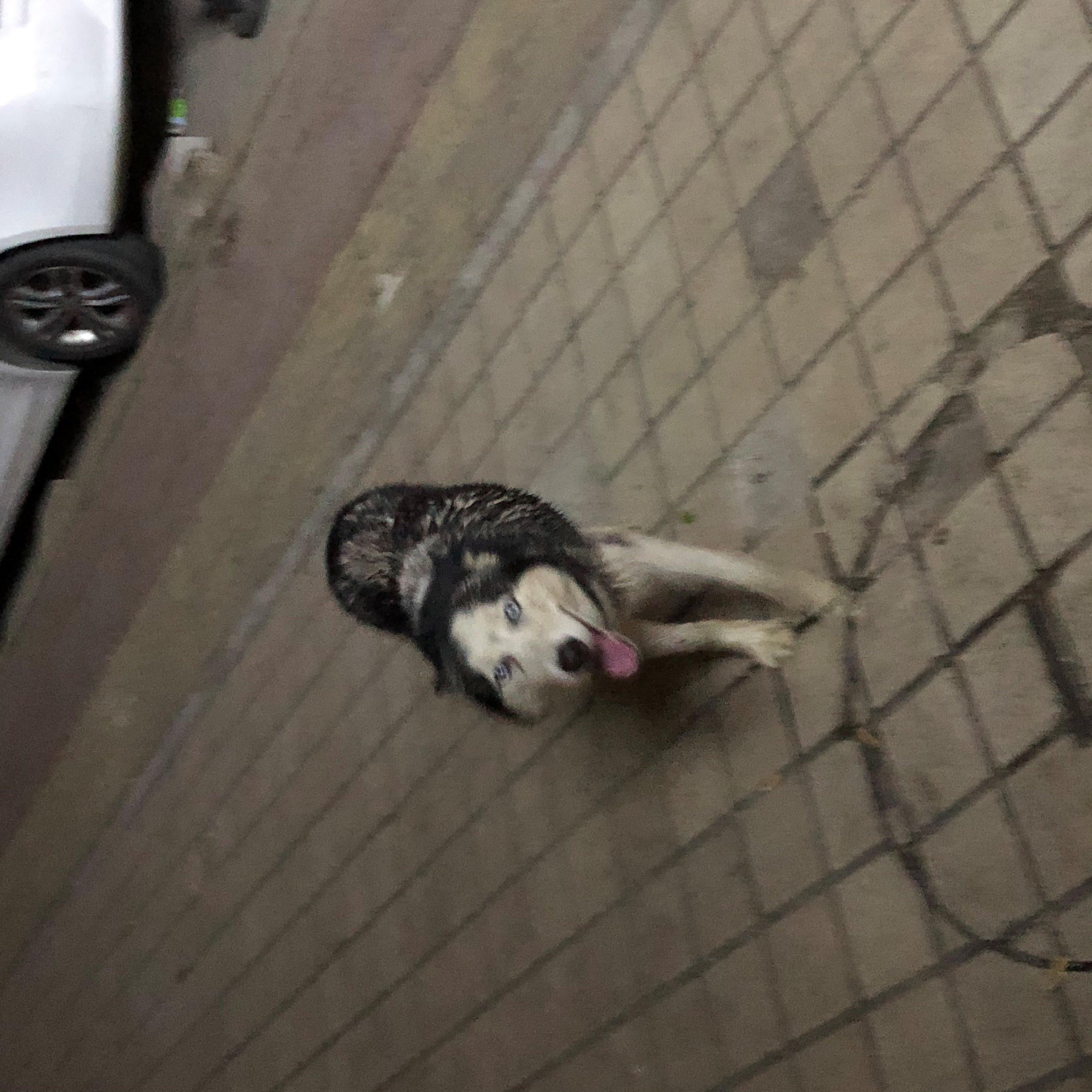 谁的狗丢了