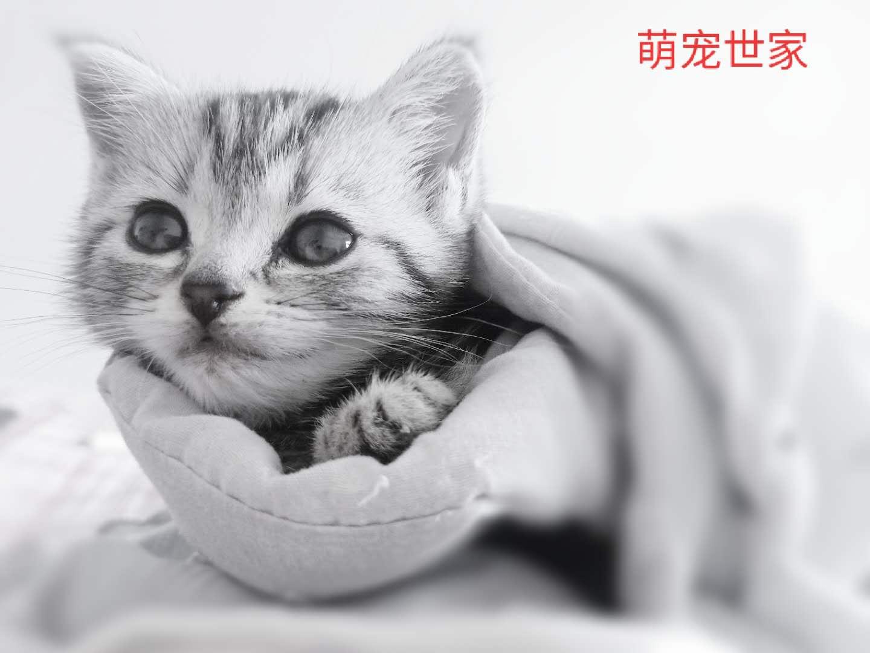 名猫仔出售