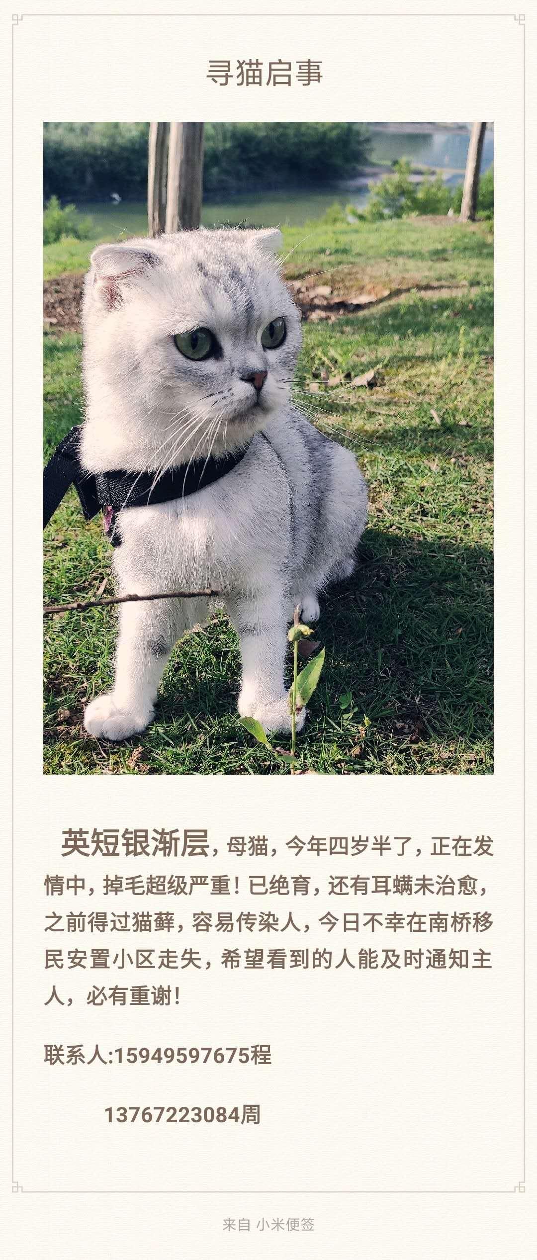 拜托各位如果有看到类似的猫咪请联系一下!