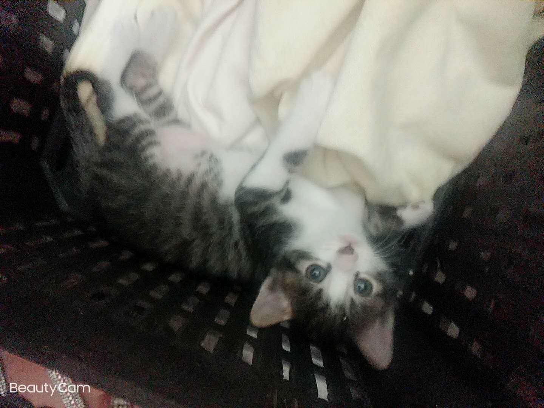 乖巧的小奶猫