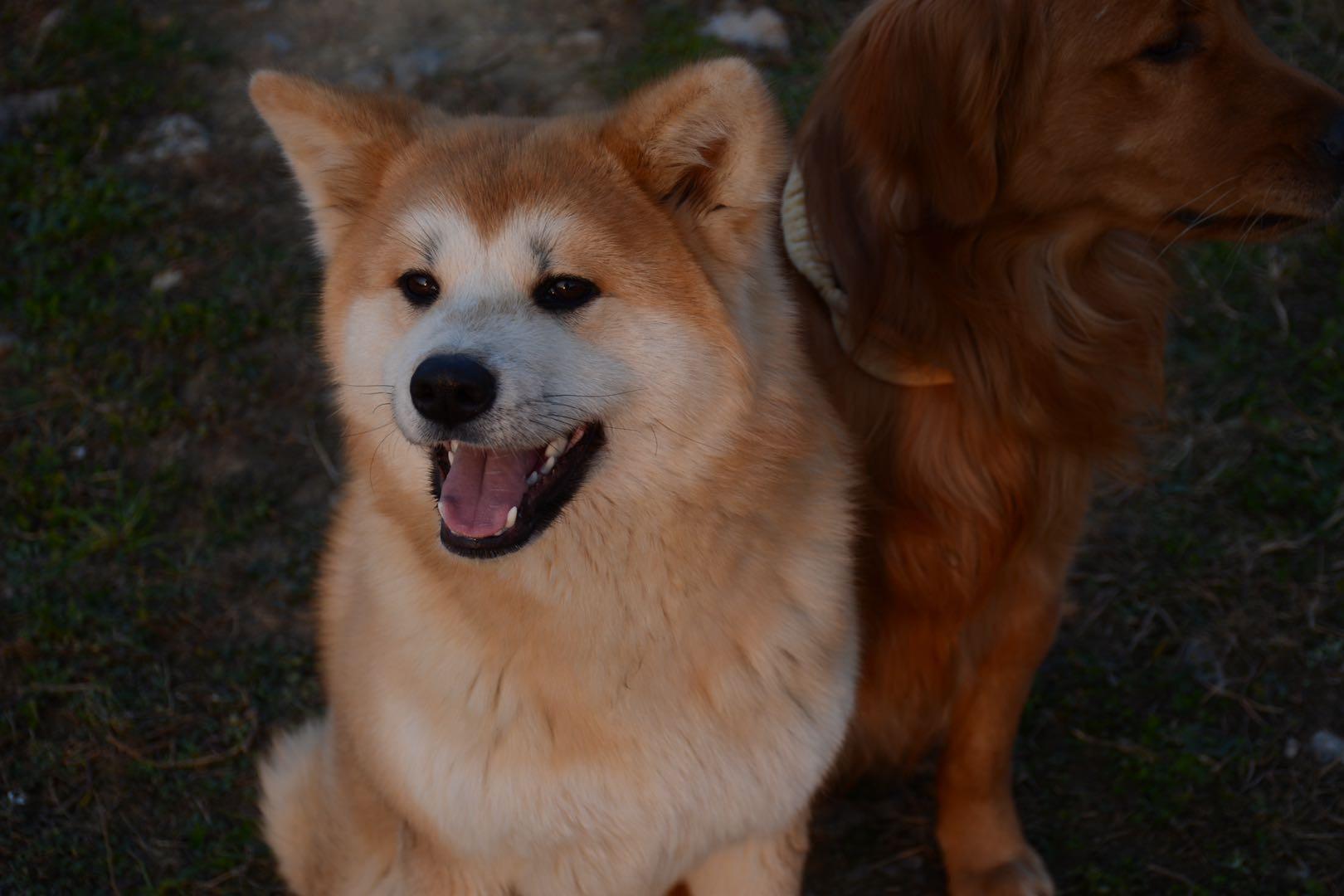 惠水縣稅務局門口丟失兩條狗